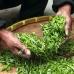 cosmétiques et soins à l'extrait de thé vert